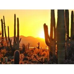 亚利桑那州立法者通过区块链记录条例草案